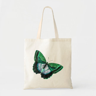 Vintage Antique Green Butterfly 1800s Illustration
