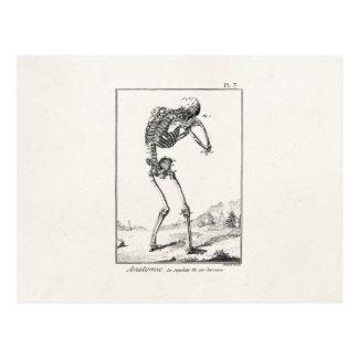 Vintage Antique Human Skeleton Medical Anatomy Postcard