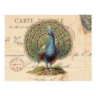 Vintage antique peacock postcard