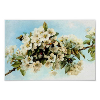 Vintage Apple Blossoms Poster