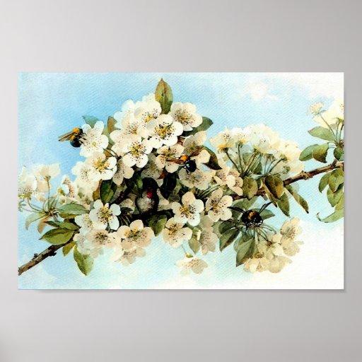 Vintage Apple Blossoms Poster