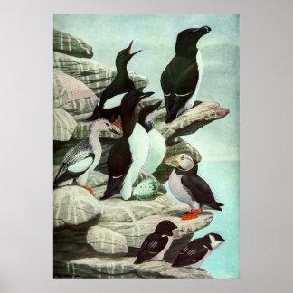 Vintage Aquatic Birds Puffins, Marine Life Animals Poster