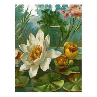 Vintage, Aquatic Flower, Wife Birthday Postcard