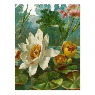 Vintage, Aquatic Flower, Wife Birthday Postcard