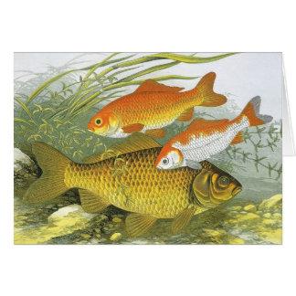 Vintage Aquatic Goldfish Koi Fish, Marine Sea Life Card
