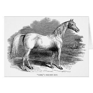 Vintage Arabian Horse, Card