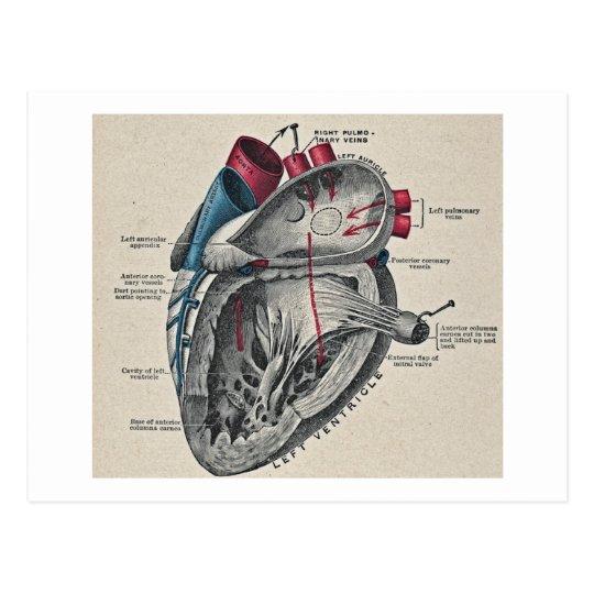 Vintage Art Anatomical Heart Diagram - science Postcard