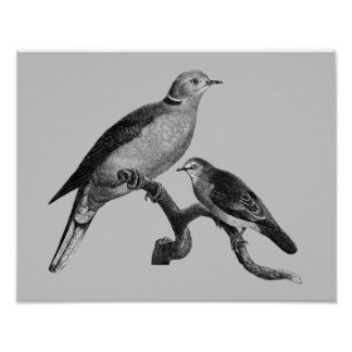 Vintage Art Doves On Branch Animal Poster
