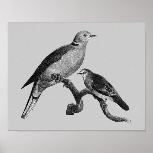 Vintage Art Doves On Branch Animal Poster