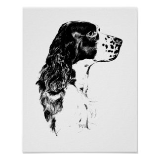 Vintage Art English Springer Spaniel Poster