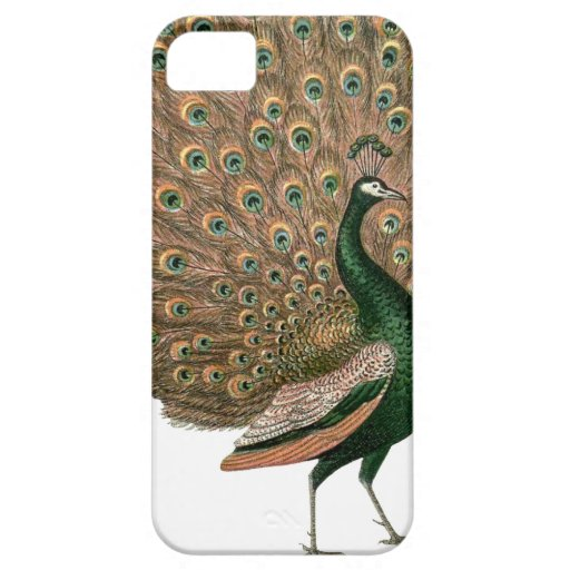Vintage art Peafowl (peacock) plummage green gold iPhone 5 Covers