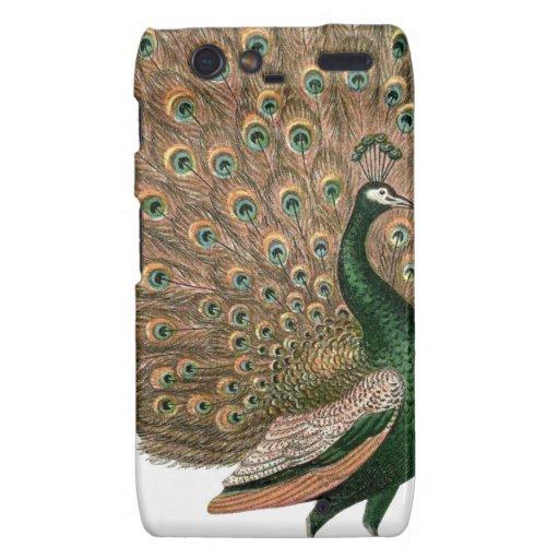 Vintage art Peafowl (peacock) plummage green gold Droid RAZR Covers