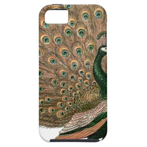 Vintage art Peafowl (peacock) plummage green gold Case For iPhone 5/5S