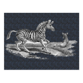 Vintage Art Zebra and Foal Wildlife Postcard