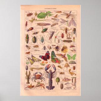 Vintage arthopods poster 1920