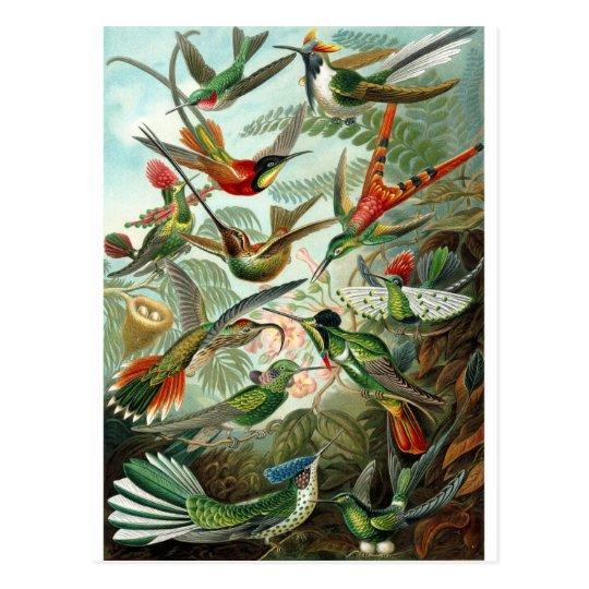Vintage Artist Ernst Haeckel Postcard