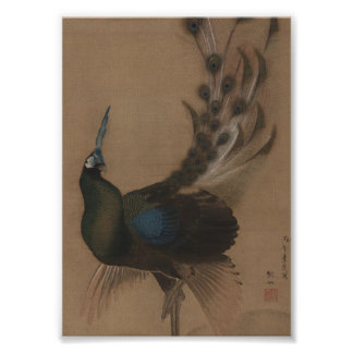 Vintage Asian Peacock Art Print