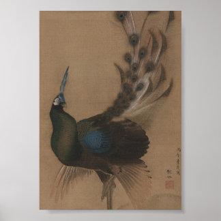 Vintage Asian Peacock Art Print