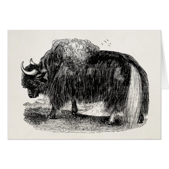 Vintage Asian Yak Retro Yaks Animal Illustration Card