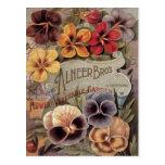 Vintage Assorted Pansies Seed Packet Post Cards