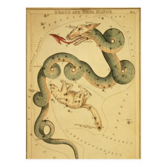 Vintage astronomy print Draco & Ursa Minor Postcard
