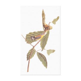 Vintage Audubon Magnolia Warbler Bird Canvas Print
