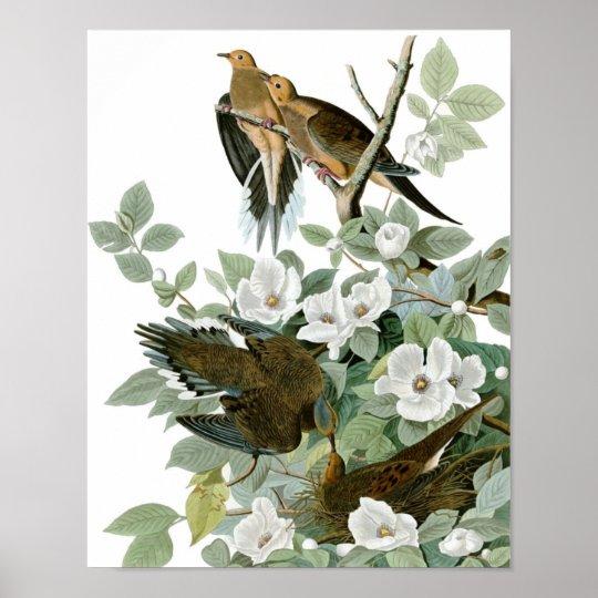 Vintage Audubon Mourning Dove Poster Print