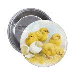 Vintage Baby Chickens 6 Cm Round Badge