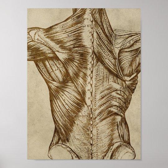 Vintage Back Anatomy Poster Medical Muscles Print