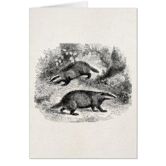 Vintage Badger 1800s Badgers Illustration Card by SilverSpiral