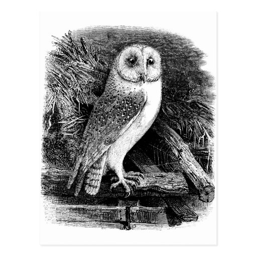 Vintage barn owl illustration postcard