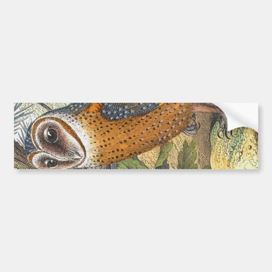 Vintage Barn Owl Painting Bumper Sticker