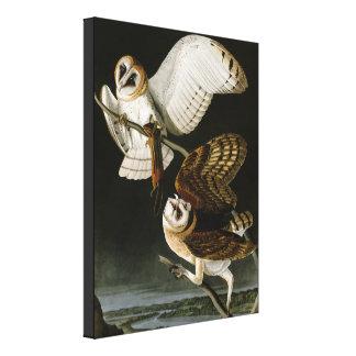 Vintage Barn Owls Illustratation (Audubon) Canvas Print