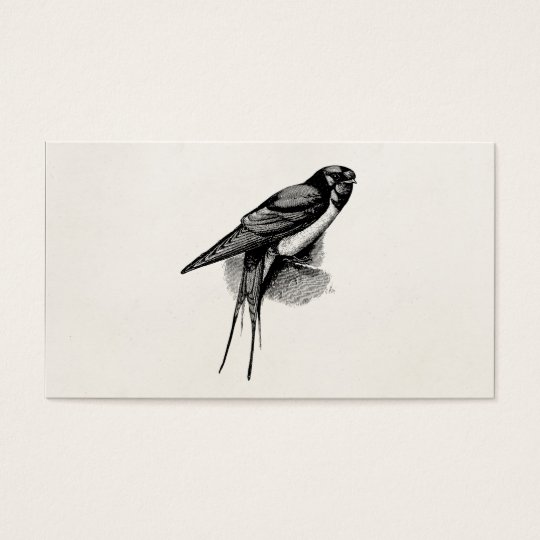 Vintage Barn Swallow Swift Bird Illustration Business Card