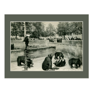 Vintage bear pit in Bern (Berne) Switzerland photo Postcard