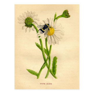 Vintage Bee and Daisy Postcard