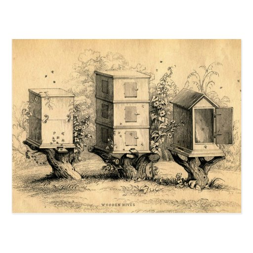Vintage Beekeeping Beehives Beehive Post Cards