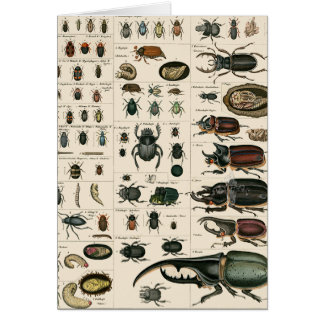 Vintage Beetle Illustration Card