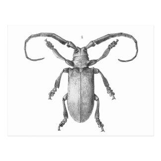 Vintage beetle illustration card postcard