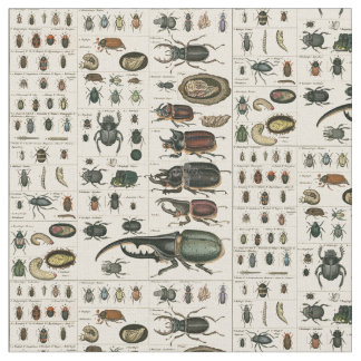 Vintage Beetle Illustration Fabric