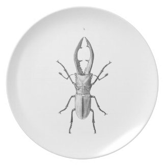 Vintage beetle illustration plate