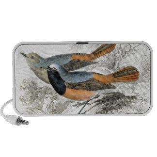 Vintage Bird 07 Mp3 Speakers
