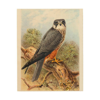 Vintage Bird Art Eurasian Hobby Wood Canvas