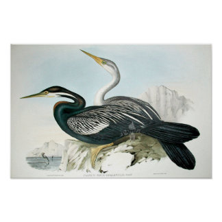 Vintage Bird Art Poster