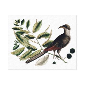 Vintage bird botanical canvas
