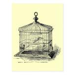 Vintage Bird Cage Postcard