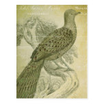 Vintage Bird Green Feathers Peacock Collage Post Cards