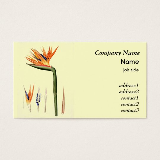 Vintage bird of paradise flower business card