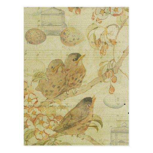 Vintage Birds Branch Birdcage Eggs Music Sheet Postcards