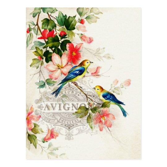 Vintage Birds French Design Postcard